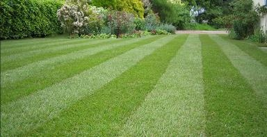 Green Guys Lawn Care - Florence, AL