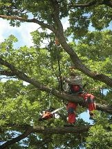 A -1 Dave's Tree Service - Munster, IN