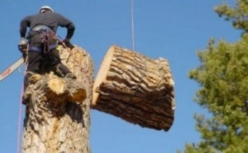 Mike's Tree & Landscaping Service - Byron, GA