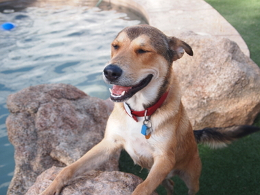 Raintree Pet Resort + Medical Center - Scottsdale, AZ