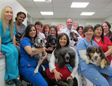 Bond Animal Hospital - White Plains, NY