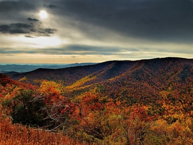 Forestwander.com - Charleston, WV