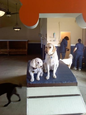 Loved Dog Doggie Day Care - Los Angeles, CA