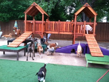 Dog resort
