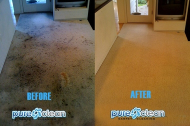 Pure Clean Carpet Cleaning - Woodinville, WA