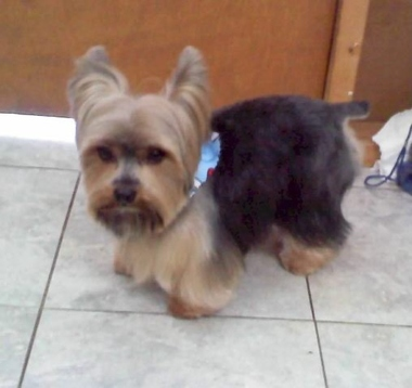 Muttley Crew Dog Grooming Los Angeles