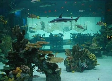 Downtown Aquarium - Houston, TX
