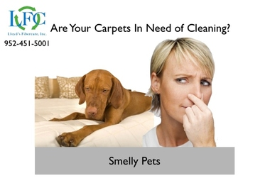 ChemFree Carpet Cleaning - Saint Paul, MN