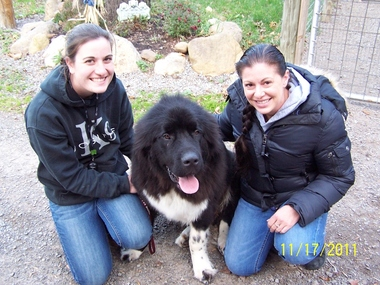 Dog Obedience Training Victor Ny