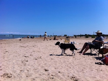 Susan Kimmelman Off-Leash Dog Beach (Montrose Dog Beach) - Chicago, IL