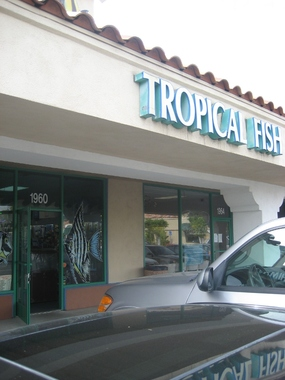 New Wave Tropical Fish - Orange, CA
