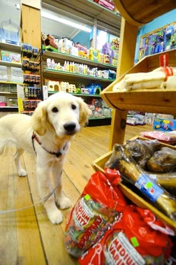 Knapp's Pets, Hobbies & Music - Bennington, VT