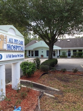All Pet Care Hospital - Clearwater, FL