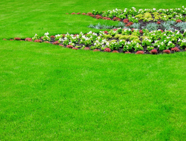 Francisco F. Lawn, Landscaping & Sod - Fort Myers, FL