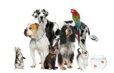 Rainbow Watchers LLC Professional Pet Care - Lexington, KY