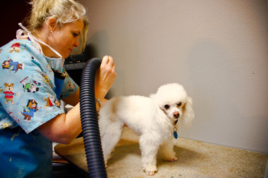 Family Pet Clinic - Temple, TX