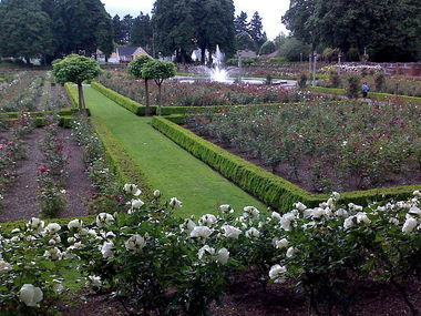 Peninsula Park Rose Garden - Portland, OR