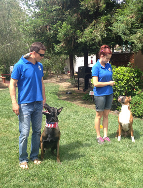 Master Dog Training - Woodland Hills, CA