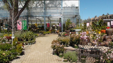 Watters Garden Center, INC - Prescott, AZ