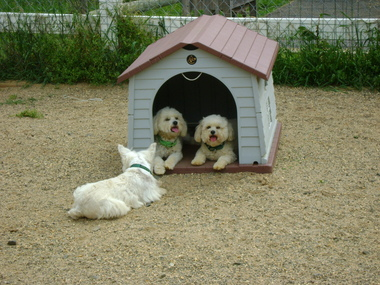 Dogs On The Farm and Cats Too - Atlantic Highlands, NJ