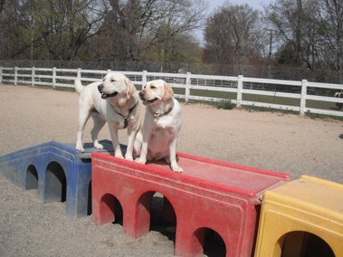 Dogs On The Farm & Cats Too - Atlantic Highlands, NJ