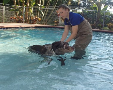 Tails-A-Waggin Animal Hospital & Pet Resort - Fort Myers, FL