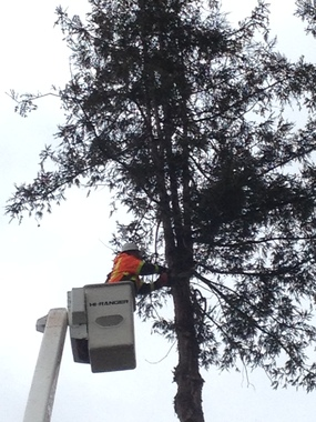 Richard's Tree Services - Yuba City, CA