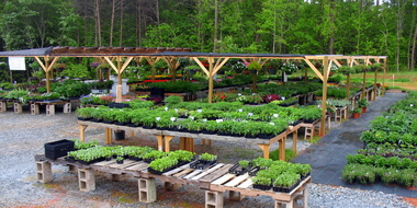 Tri-City Greenhouse - Forest City, NC