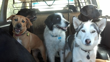 Top Dog Daycare & Kennel Free Boarding - Seattle, WA