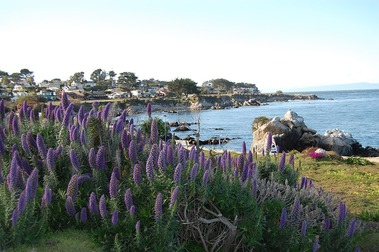 Forest Hill - Pacific Grove, CA