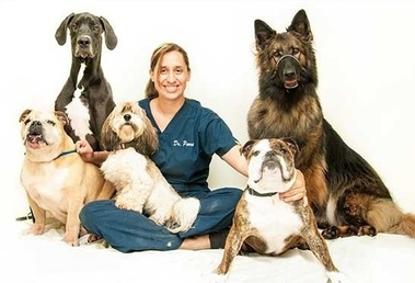 Parkview Animal Hospital - St. Petersburg, FL