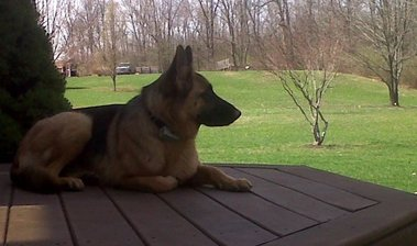 Dog Guard of Hudson Valley, LLC - Montgomery, NY
