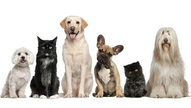 County Line Veterinary Services - Homeworth, OH